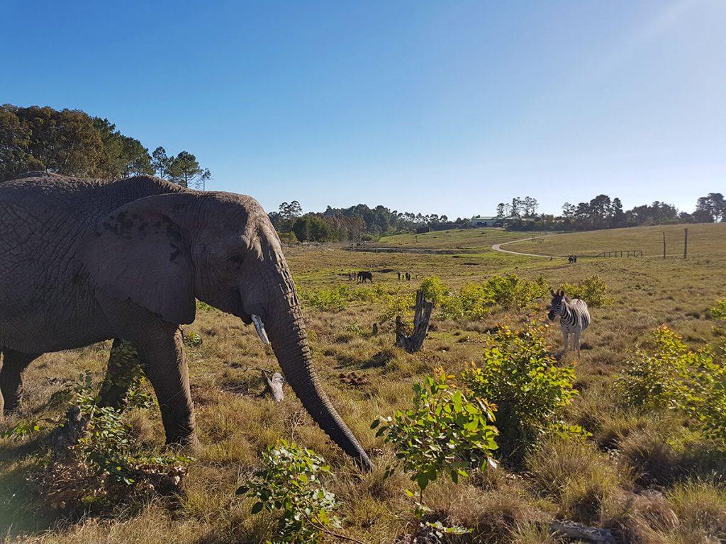 Olifantenreservaat